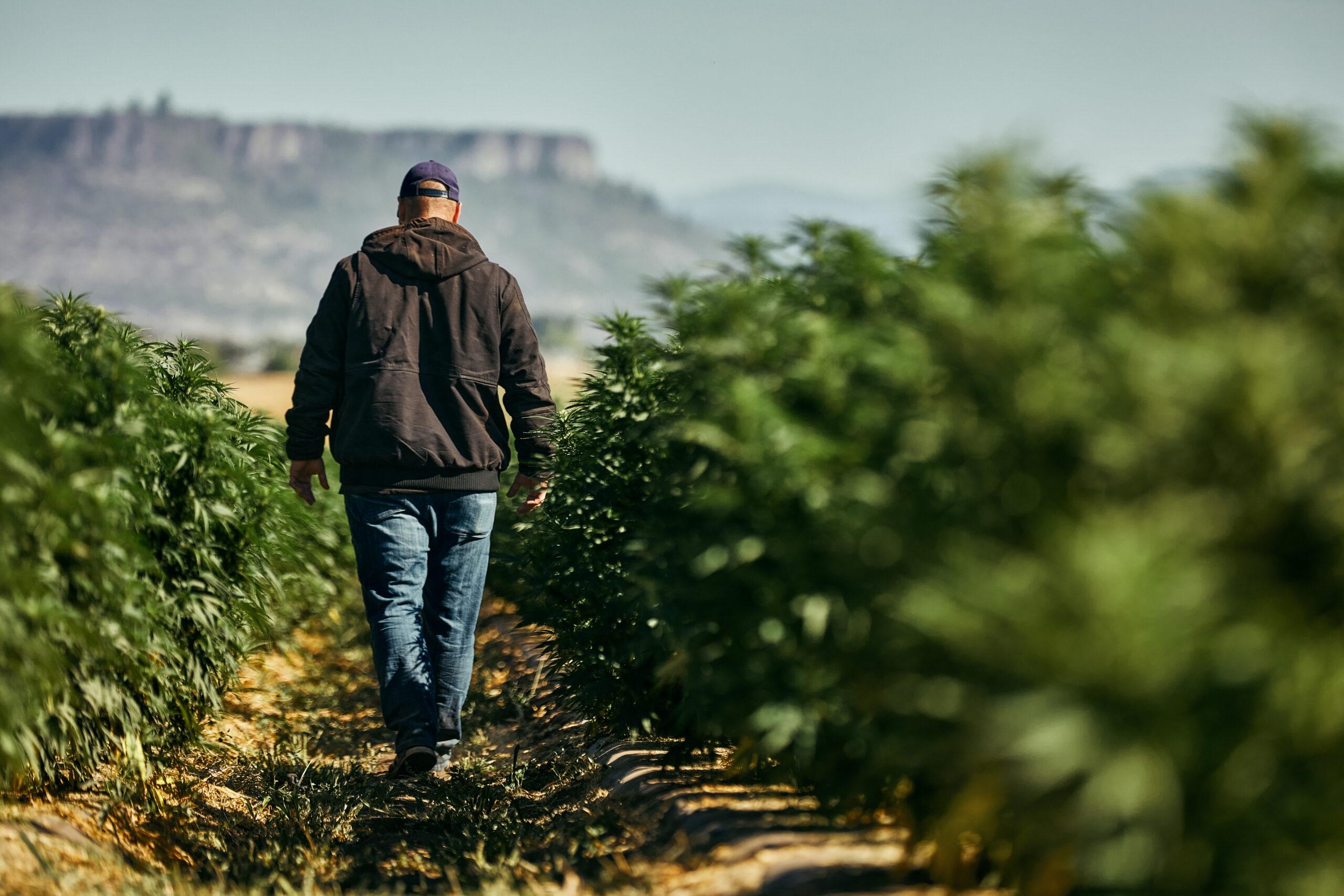 Terpene Fresh - Scottsdale Brand Lifestyle Photography - Cannabis Cultivator Walking Through Fields